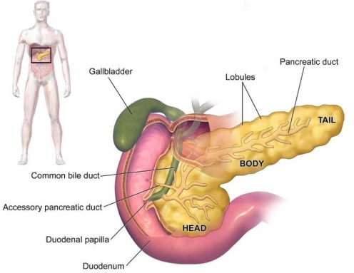 negii se pot transmite în timpul nașterii cancer feminin ou masculin